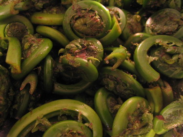 Fiddleheads_001