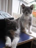 Kitties_and_martini_111_1